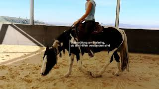 Brandy - 5 Pferde 2 Wochen