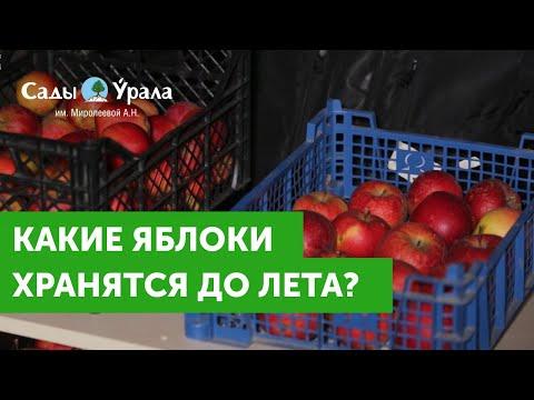 """Как сохранить урожай яблок до лета: личный опыт. Питомник """"Сады Урала"""""""