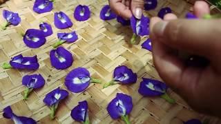 Butterfly Peas Flower Tea
