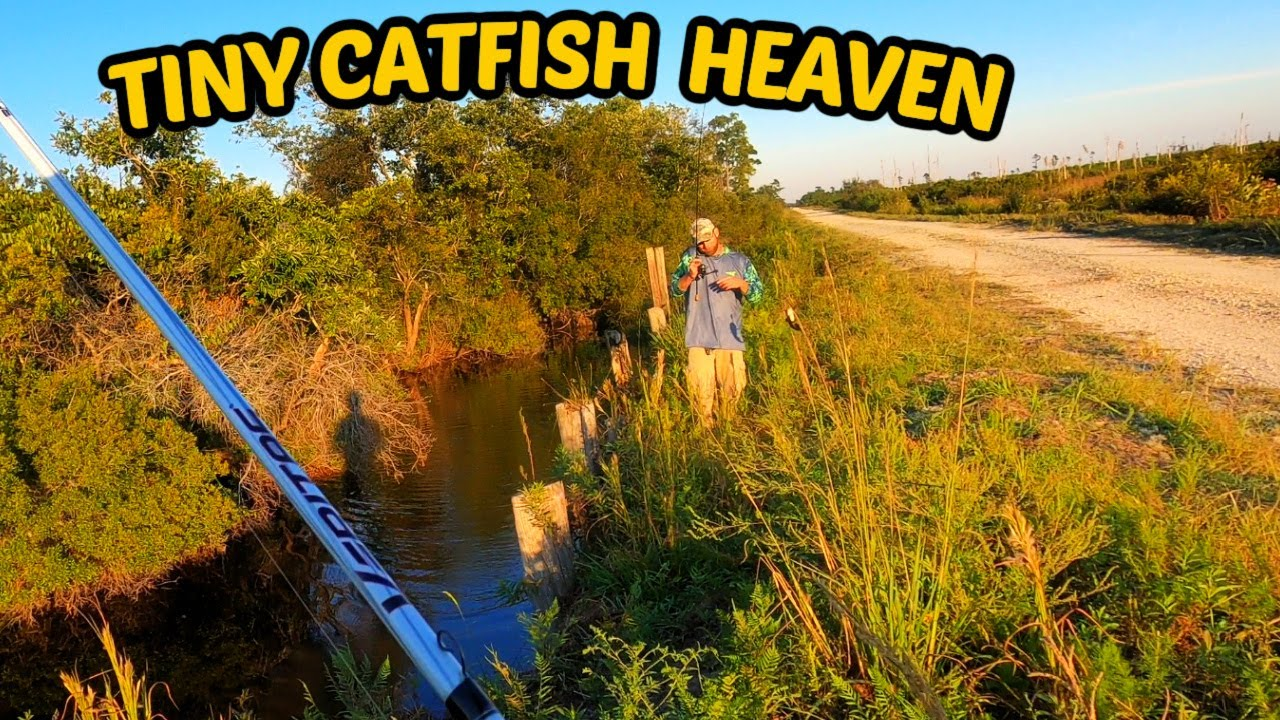 This Canal was Loaded with Bullhead CATFISH