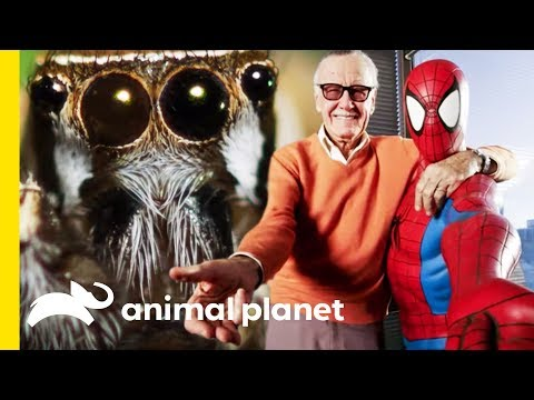 Superheroes Inspired by Super Animals and the Natural World | Animal Bites with Dave Salmoni