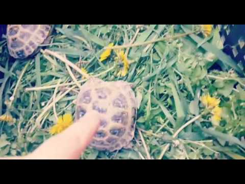 Наши черепахи