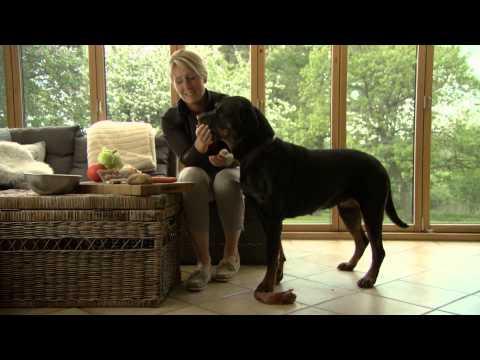 hundehvalpe opdragelse renlighed