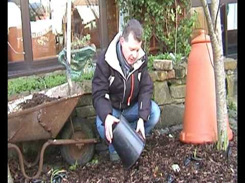 Video 2  The Composter & Forcing Rhubarb