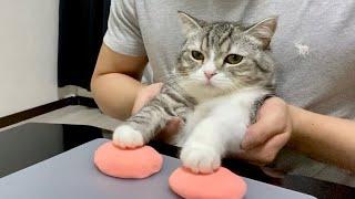 肉球の型をとられて不満げな猫がこちらです…笑