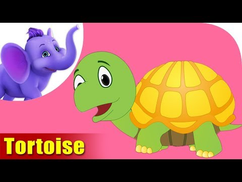 Tortoise Rhymes, Tortoise Animal Rhymes Videos for Children
