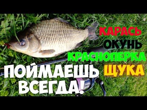 Ловля КРАСНОПЕРКИ и КАРАСЯ На СПИННИНГ. Мирная рыба на Ультралайт. Наноджиг ловит все. Окунь и Щука.