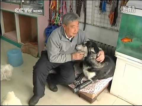 husky-walks-again-after-being-fitted-with-prosthetics