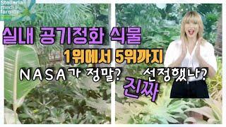 실내공기정화식물♡별꽃농부40원예&정원쟁이Vlog…