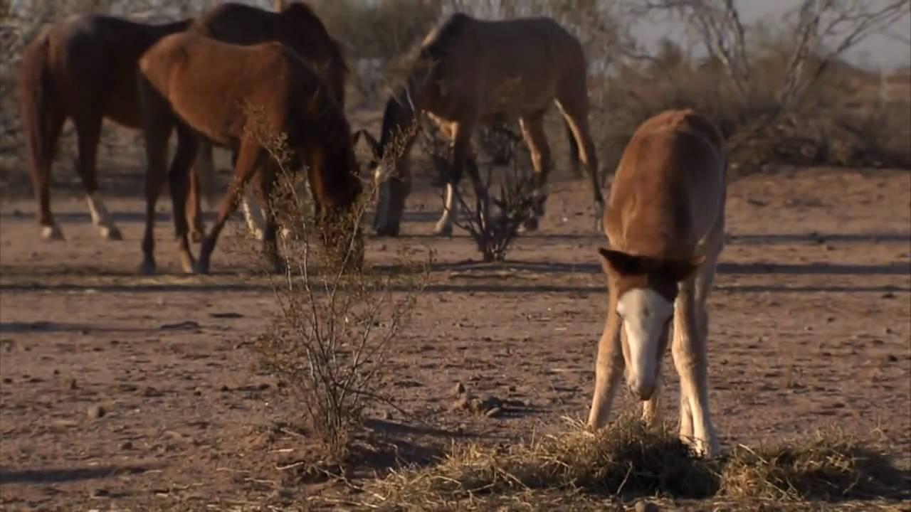 Down2Earth 11 1 - Salt River Pima-Maricopa Indian Community Wild Horses