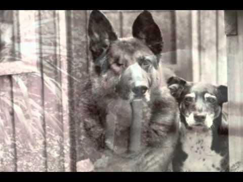 My Old Dog Trey.avi - YouTube
