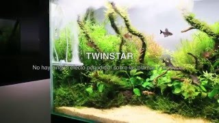 [Es] TWINSTAR M5 - Acuario Plantado en solo 40 días! Detalles únicos