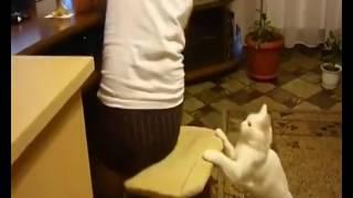 Кот  'Нельзя сидеть долго за компьютером'.