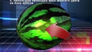 Как правильно выбрать арбуз(Новости нашего города Ноябрьск, группа компаний