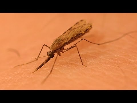 New, Strong Insect Repellent Discovered