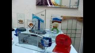 Подарить бизнес сувениры(Заказать от 1 штуки до тиража, разнообразные формы и размеры, стеклянные бизнес-сувениры из Новосибирска,..., 2014-05-16T13:25:51.000Z)