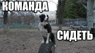 """КАК НАУЧИТЬ СОБАКУ КОМАНДЕ """"СИДЕТЬ""""?  Два простых способа / Дрессировка собак"""