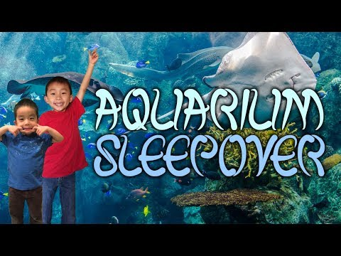 Sleepover at the Aquarium of the Pacific in Long Beach: Look Who's Traveling