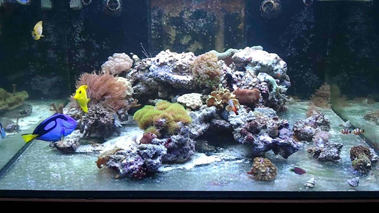 Acuario cubo marino youtube for Acuario marino precio