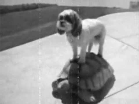 Public Domain Footage Of A Dog Riding A Turtle (1923)