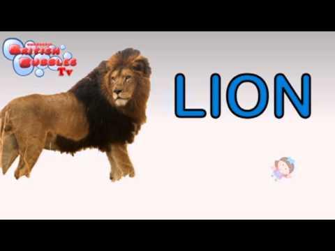 Los Animales Salvajes En Ingles