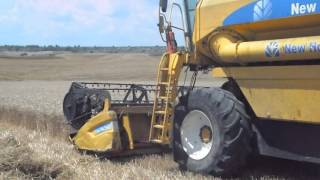 Adanada buğday hasadı
