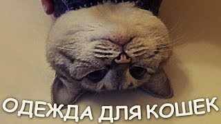 Шьем теплую одежку для кошек!