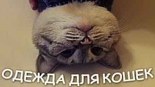 Шьем теплую одежку для кошек!(Рассказываю как я сшила теплую одежду для кошек. Ссылка на сайт, где я взяла выкройку: http://www.google.de/imgres?imgurl=htt..., 2014-03-04T19:43:32.000Z)