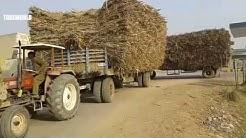 Large Equipment vs Tractor Driving Skill Transport Sugar Cane