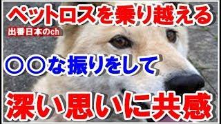 【感動する話】ゴールデンボンバーの樽美酒研二さんの愛犬への深い思い...