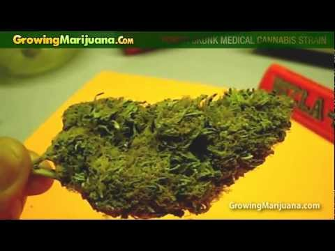 Power Skunk Medical Cannabis Strain - Smoking Marijuana