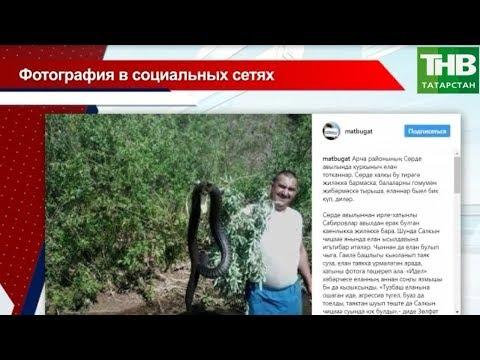 Огромная змея в Арском районе: фотошоп, покрышка или же настоящая рептилия?
