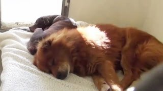 Dog Best Friends Refuse To Eat or Move In Shelter Until They Were Reunited