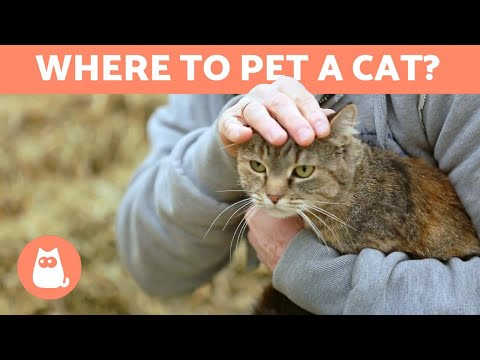 Where to Pet a Cat? - FAVORITE PLACES and TIPS