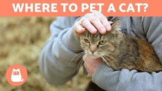 Where to Pet a Cat?  FAVORITE PLACES and TIPS
