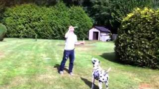 Duffy The Wonder Dalmatian Jumping And Catching Bubbles