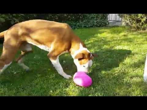 """Testbericht: """"Dog Pyramid"""" Intelligenzspielzeug von Nina Ottosson"""