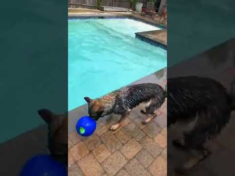 Swimming with dogs | Dogs in the Pool