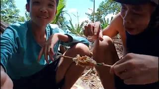 Hốt Tổ Ong Mật Ăn Tại Chỗ Đã Thèm Ú Ù Ù Siêu Lầy | Tha Linh Vlogs