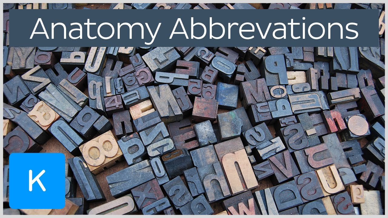 the 31 most common medical terminology anatomy abbreviations