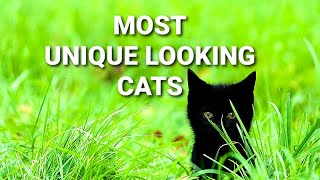 MOST UNIQUE LOOKING CATS IN THE WORLD!