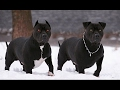DOG BREED Best Best Fastest Dog Breed for Cold Weather [Mr Fahey]