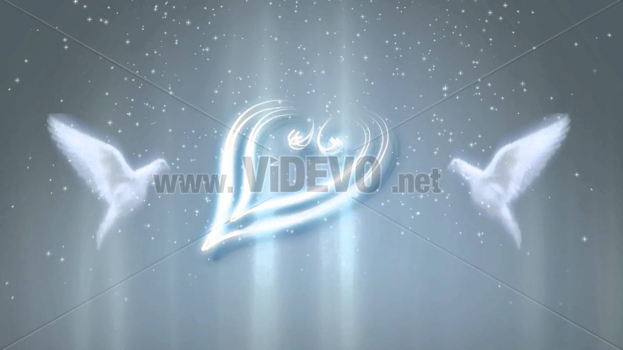 Pigeon free footage in mp4, avc format for free download 60. 31mb.