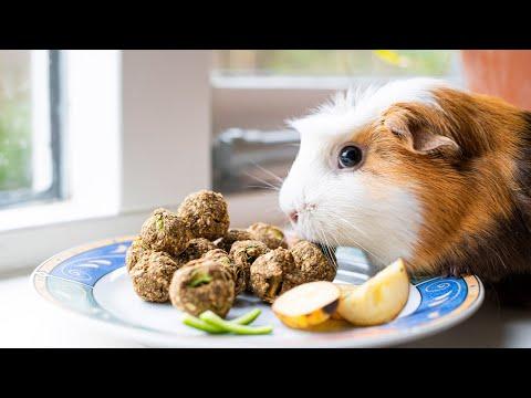 Recept voor konijn- en knaagdiersnoepjes – FitPets