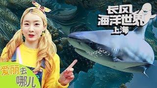 [爱丽去哪儿] 上海长风海洋世界 | 爱丽和故事 EllieAndStory