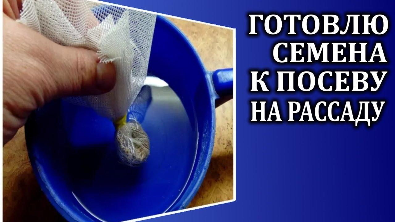 Главная>зерновые, бобовые, семена> гречка зелёная для проращивания. Купить зелёную гречку в москве можно, посетив магазин и-мне.