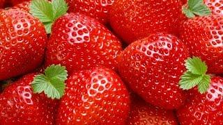 видео: Технология и ягодные культуры ЛПХ Павлийские