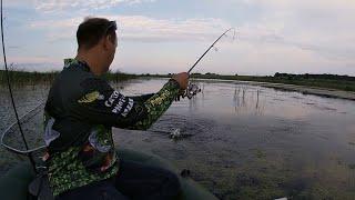 Ловля щуки на спиннинг с лодки На что ловить щуку в июле Как ловить щуку на заросшем водоеме