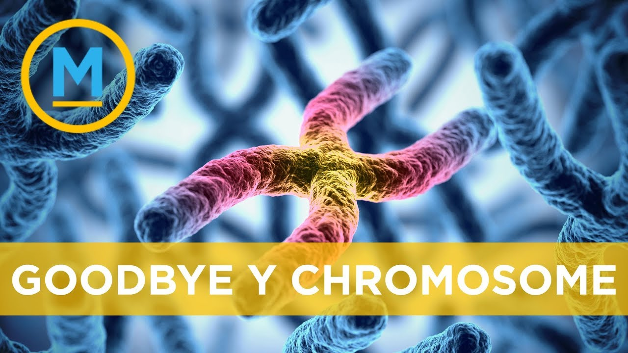 Why the Y chromosome could disappear in 4.6 million years ...