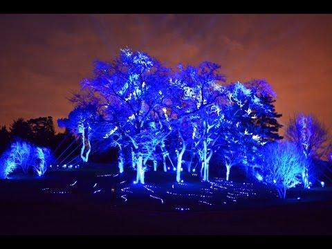 Holiday Tree Light Show Illumination at Morton Arboretum